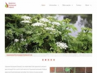 Japanese Knotweed Ireland